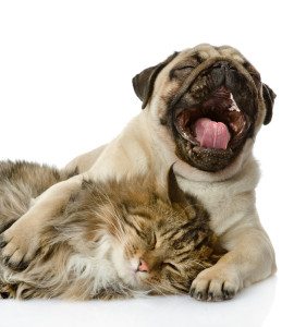 Our Favorite Dental Products for Dogs and Cats